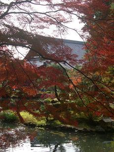 2012紅葉 006a.JPG