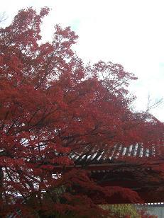 2012紅葉 009a.JPG